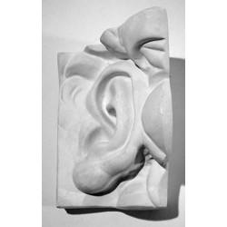 Гипсовое ухо Давида левое